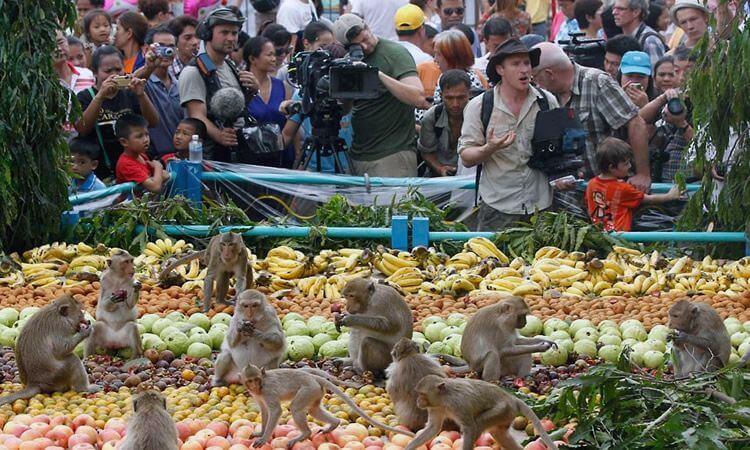 Фестиваль мавп у Лопбурі