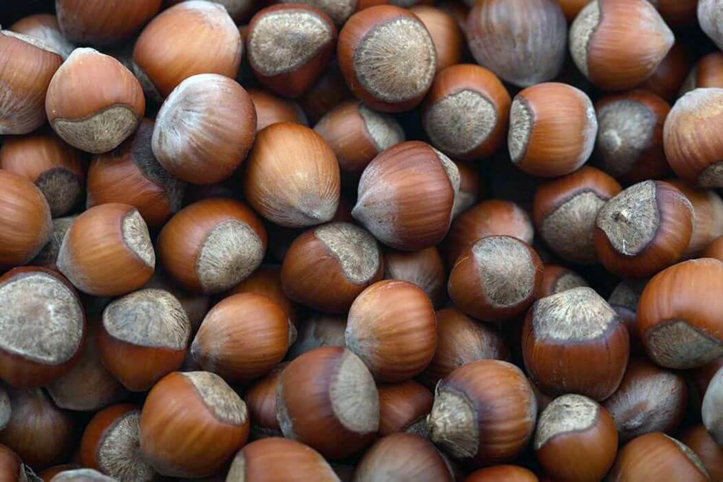 Фундук, лещина (лесной орех)