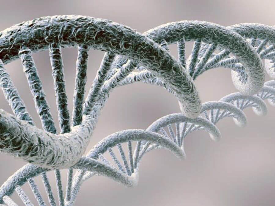 ДНК людини і банана співпадають на 50%