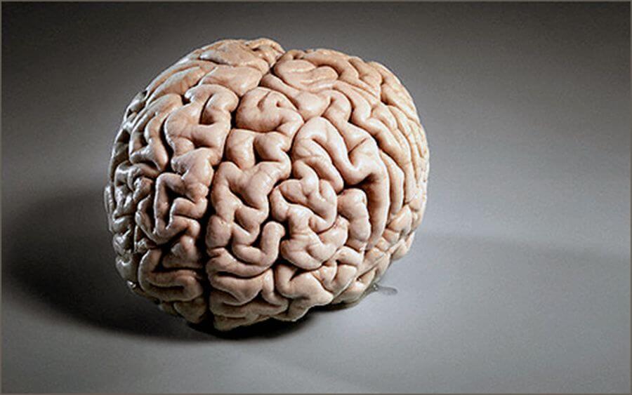 Людської мозок може запам'ятати всю інформацію, яка була в загальному доступі на 2000 рік