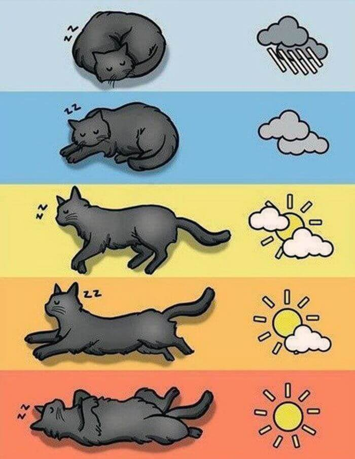 Прогноз погоды от животных