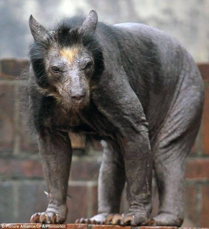 Ведмідь без шерсті