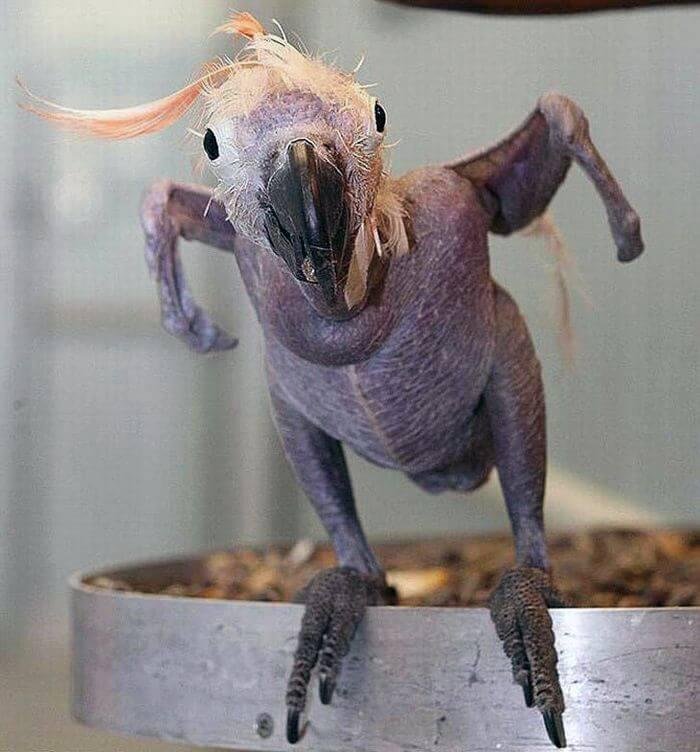Попугай без шерсти