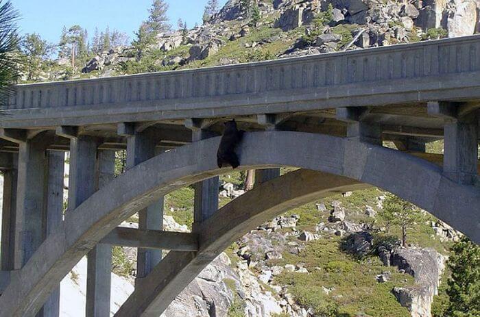 Порятунок ведмедя