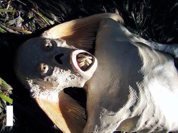 Тело русалки