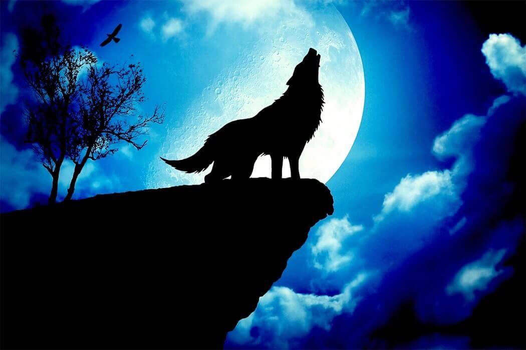Почему волки воют на луну легенды?
